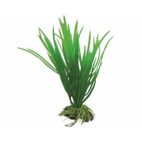 Hobby Hobby Plant Cyperus 16 cm