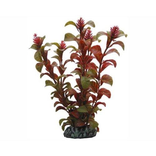 Hobby Hobby Plant Rotala 16 cm