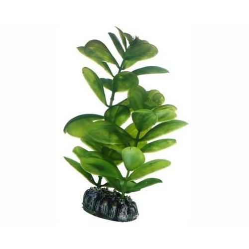 Hobby Hobby Plant Saururus 16 cm