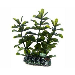 Hobby Hobby Plant Bacopa 7 cm