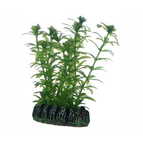 Hobby Hobby Plant Lagarosiphon 7 cm