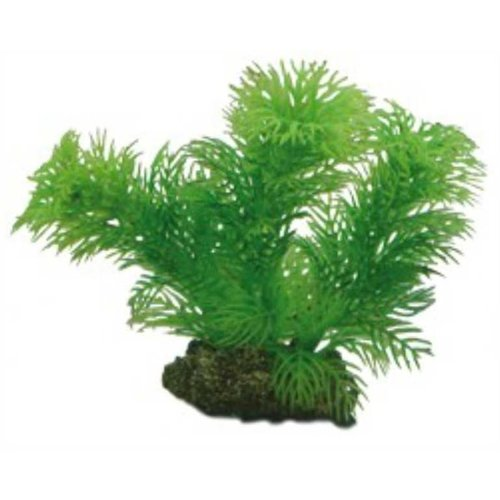 Hobby Hobby Plant Egeria 13 cm