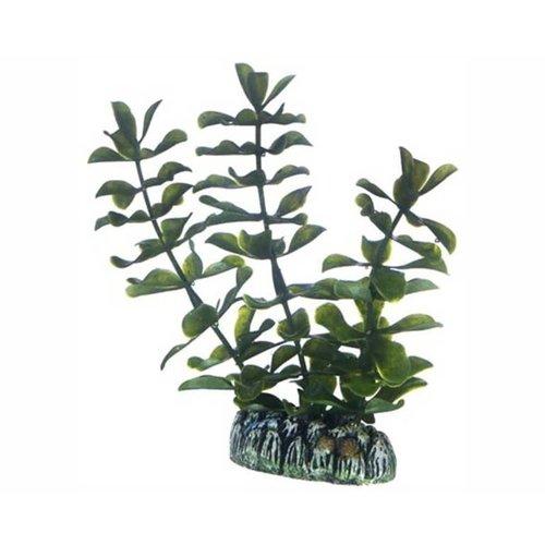 Hobby Hobby Plant Bacopa 13 cm