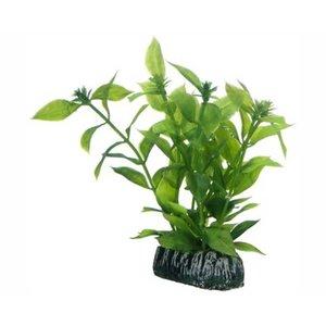 Hobby Hobby Plant Hygrophila 13 cm