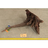 Corbo Root Small 2
