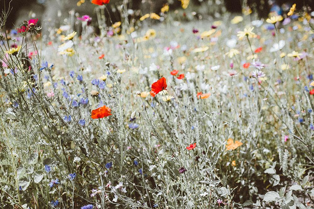 Rouwboeket veldbloemen