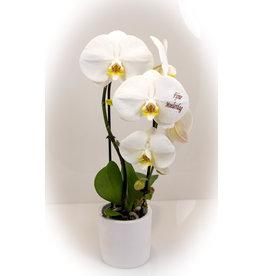 Magic Flowers Orchidee - Fijne Moederdag