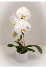 Magic Flowers Orchidee - Mama hartje