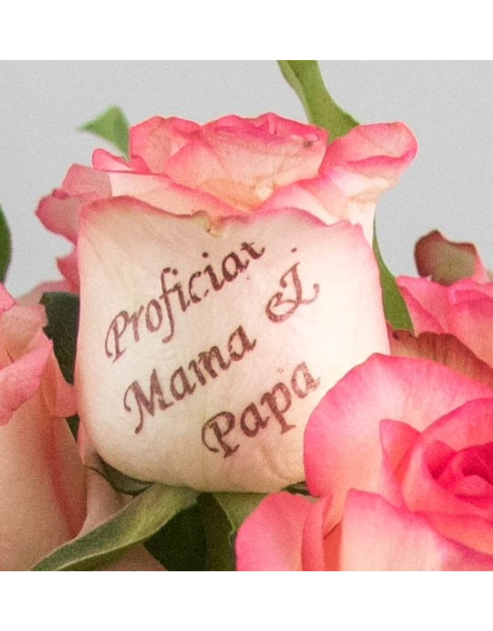 Magic Flowers Boeket 15 rozen - Wit/Roze - Proficiat Mama & Papa