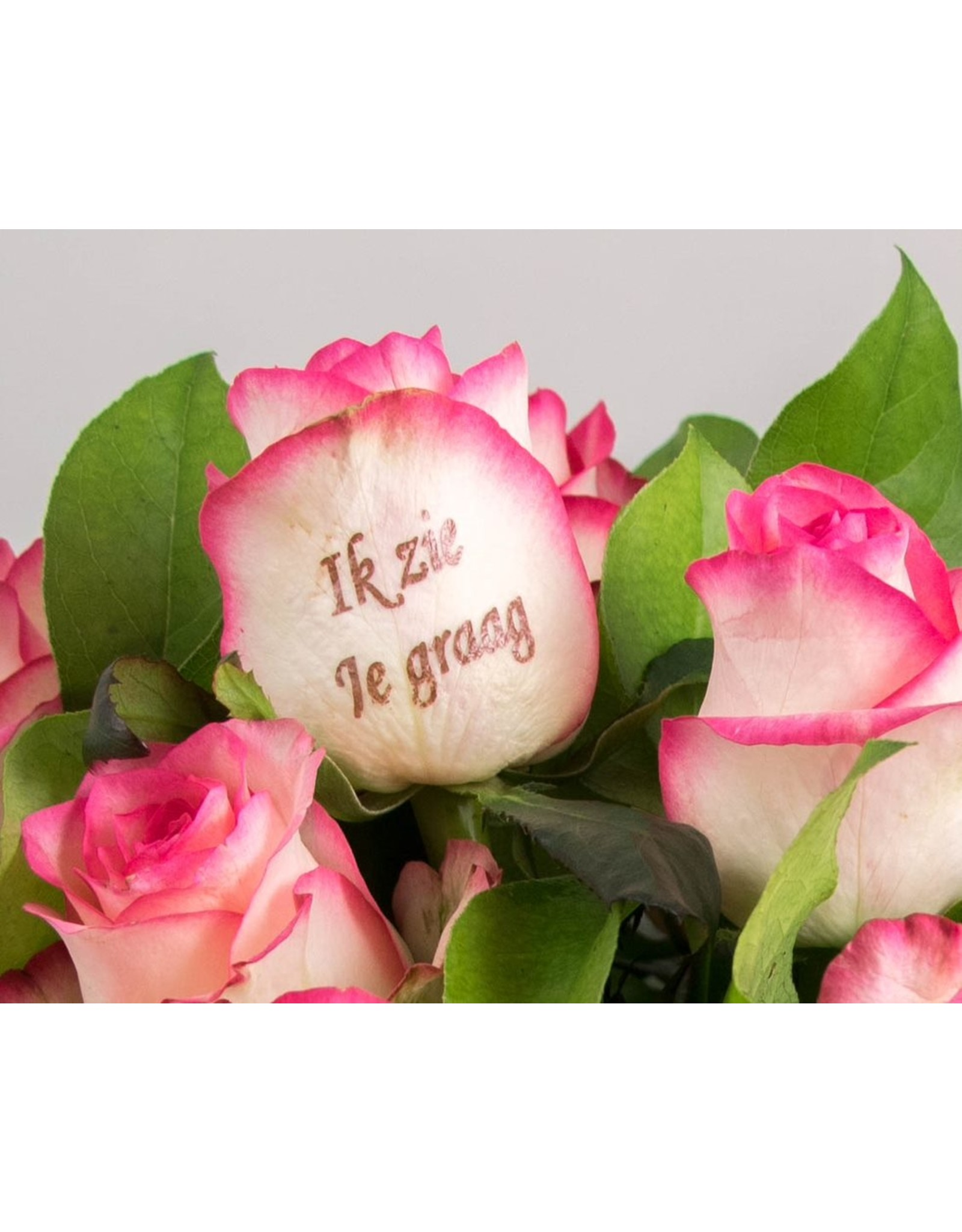 Magic Flowers Boeket 9 rozen - Wit/roze - Zie je graag