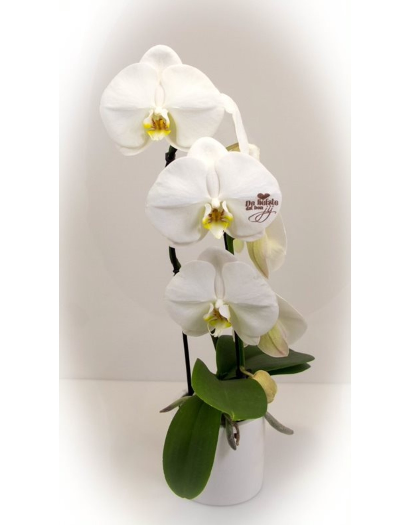 Magic Flowers Orchidee - De Liefste dat ben jij