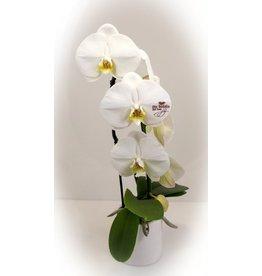 Magic Flowers Orchidee - De Liefste dat ben jij
