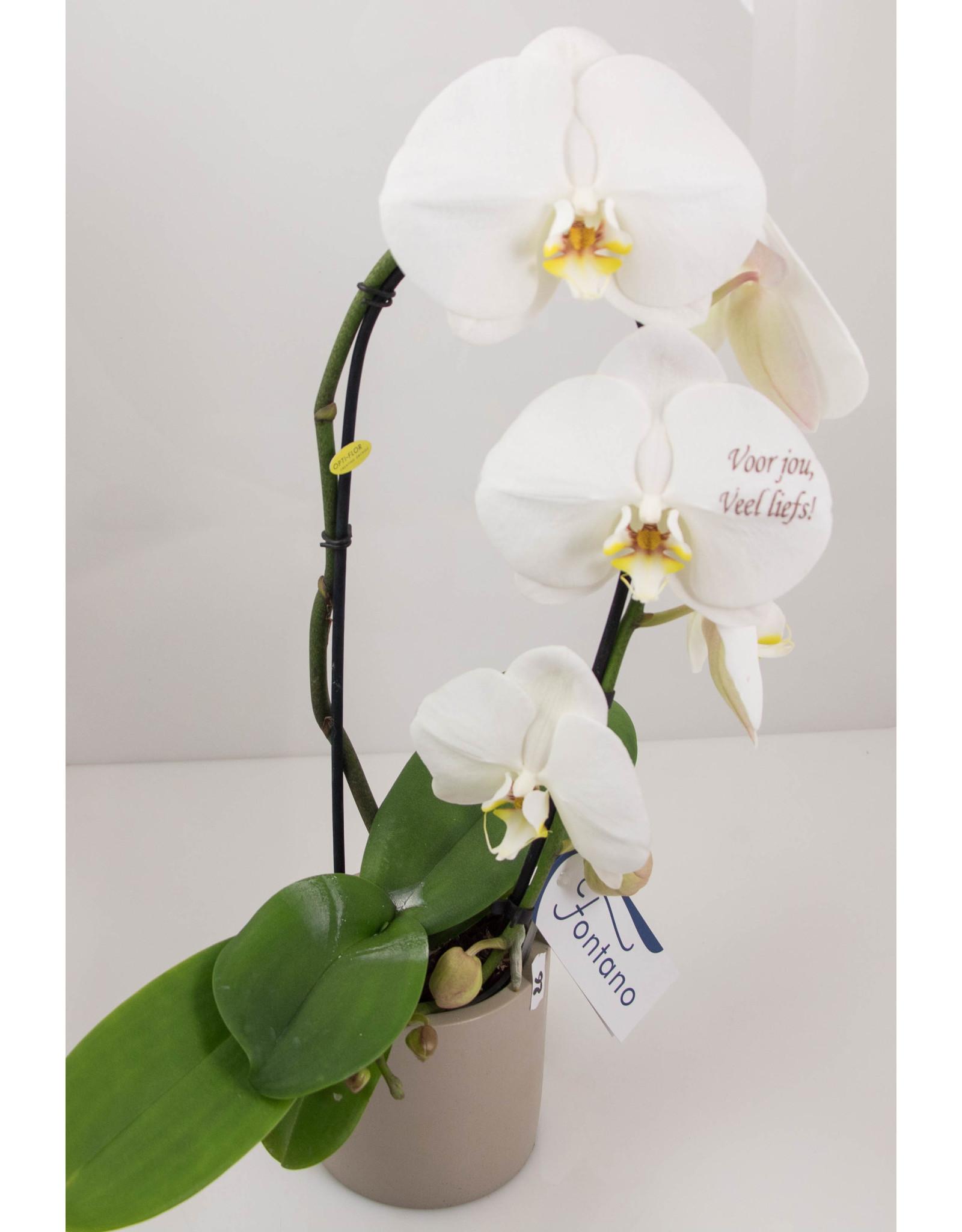 Orchidee - Voor jou, veel liefs