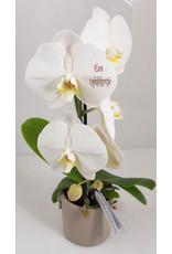 Orchidee - Een opkikkertje
