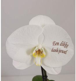 Orchidee - Een dikke dankjewel