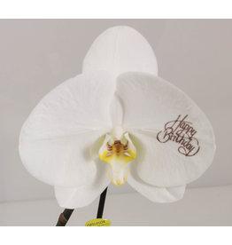 Orchidee - Happy birthday
