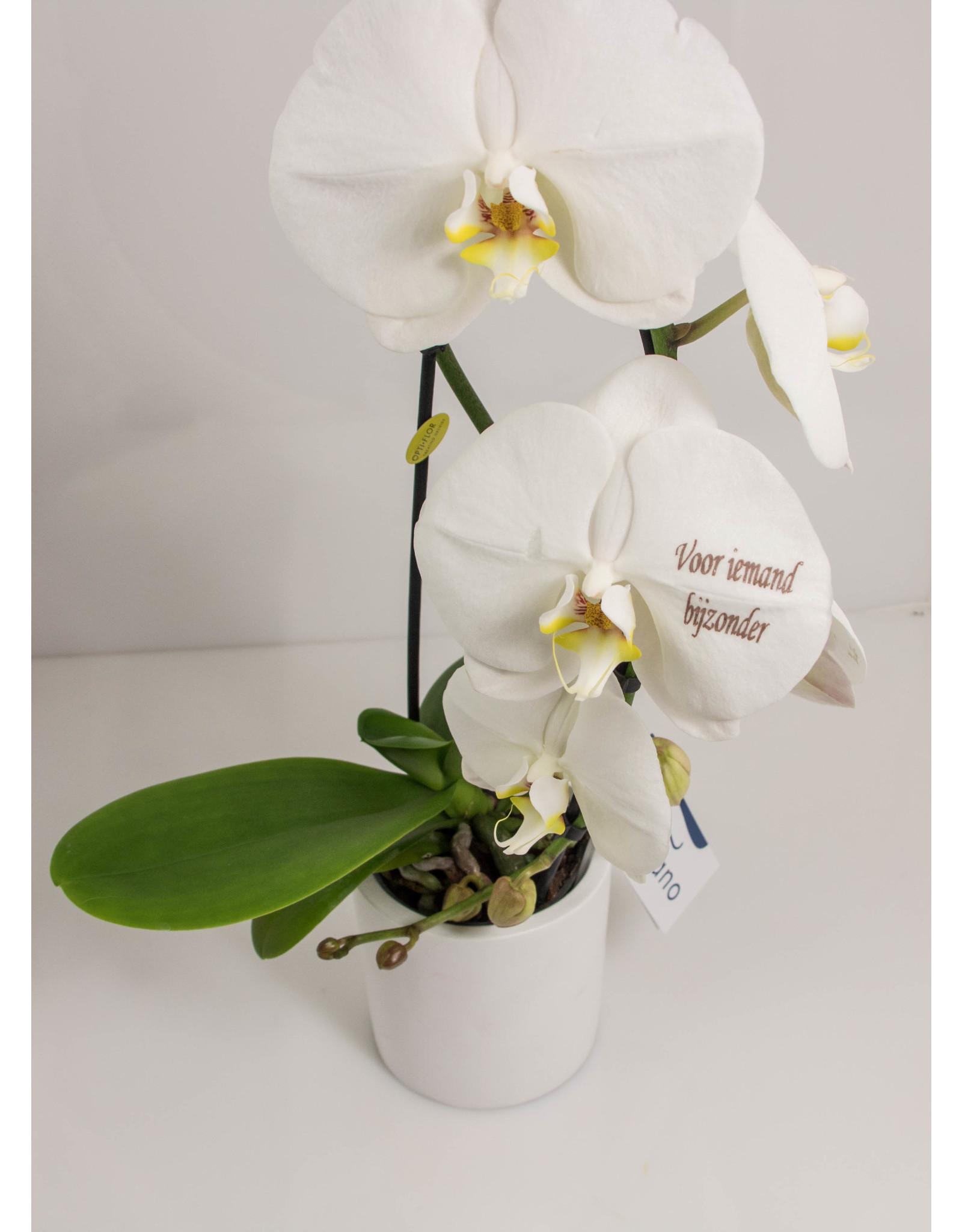 Orchidee - Voor iemand bijzonder