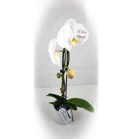 Orchidee - Ik hou van je