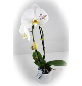 Orchidee - I love you