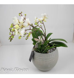 Coupe Wilde Orchidee