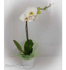 Orchidee - Speciaal voor jou