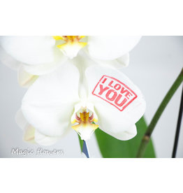 Orchidee - I love you 2
