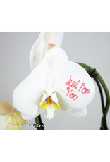 Orchidee - Just for you