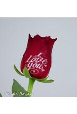 Valentine Special XXL