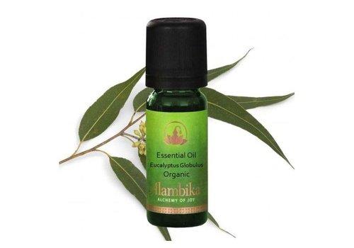 Alambika Aromatische olie - Eucalyptus