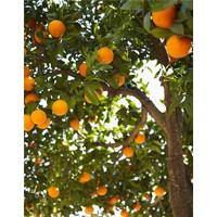 Handzeep - Sinaasappel & Jasmijn
