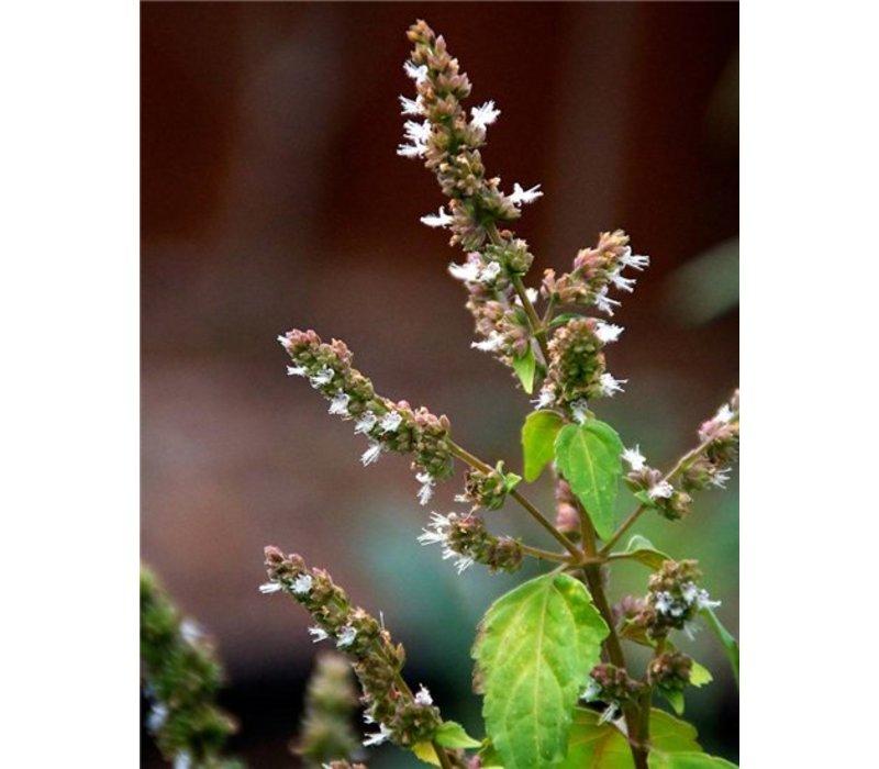 Toiletreiniger - Patchouli en Cranberry geur