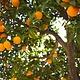 Marcels Green Soap Toiletreiniger - Sinaasappel en Jasmijn