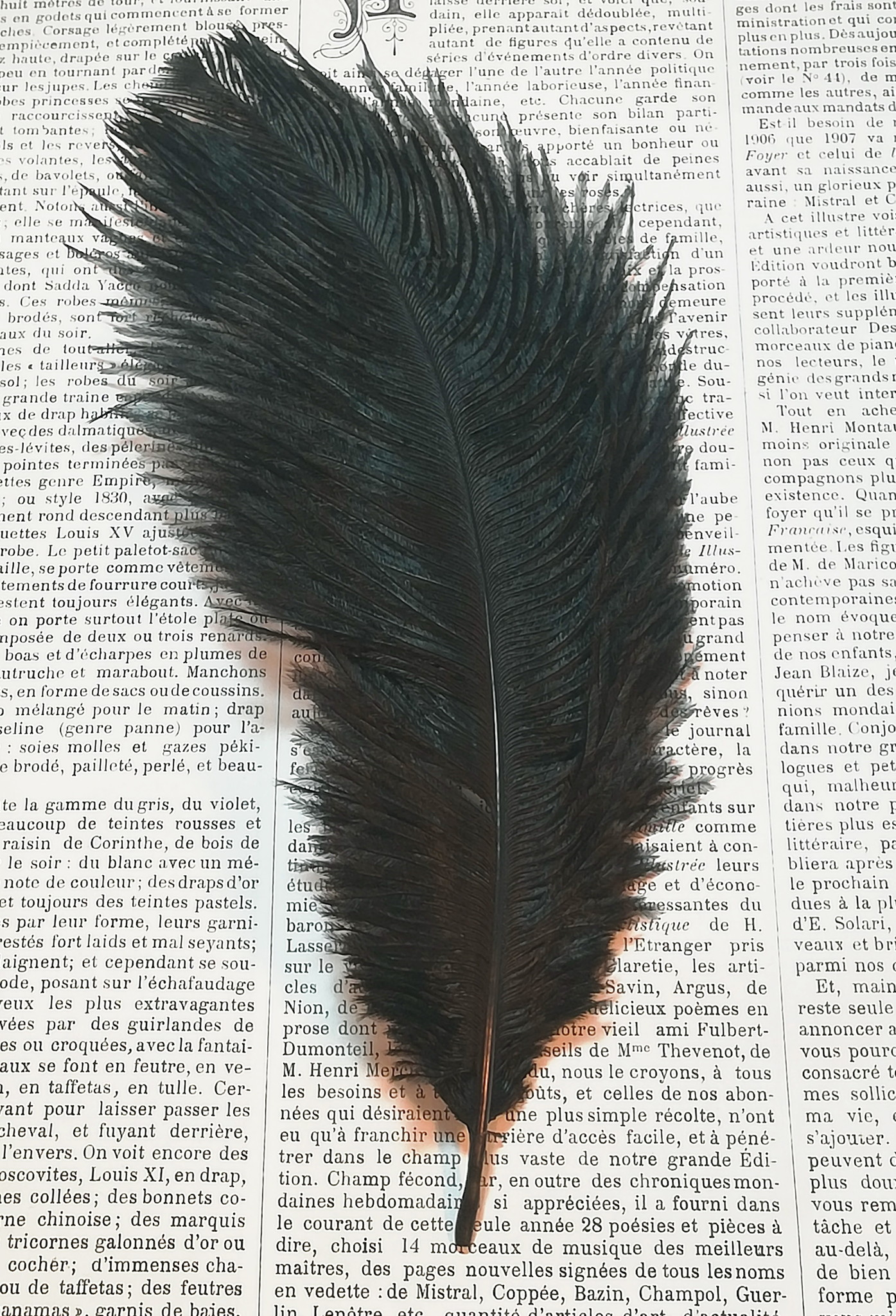Ostrich feathers.