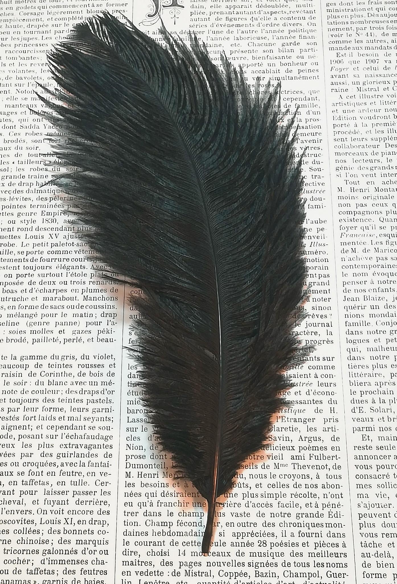Struisvogel veren.