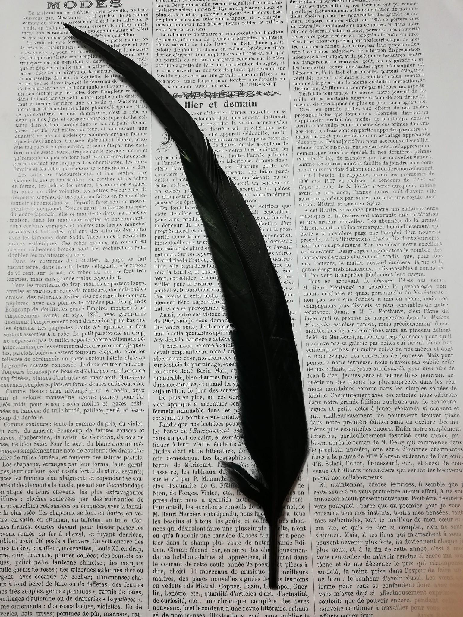 Zwarte Hanen Veer 30-35 cm lang.