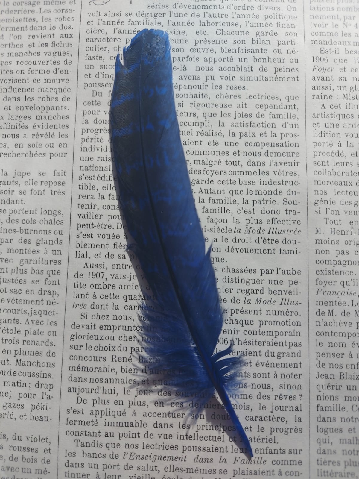 Colored Pheasant feathers.