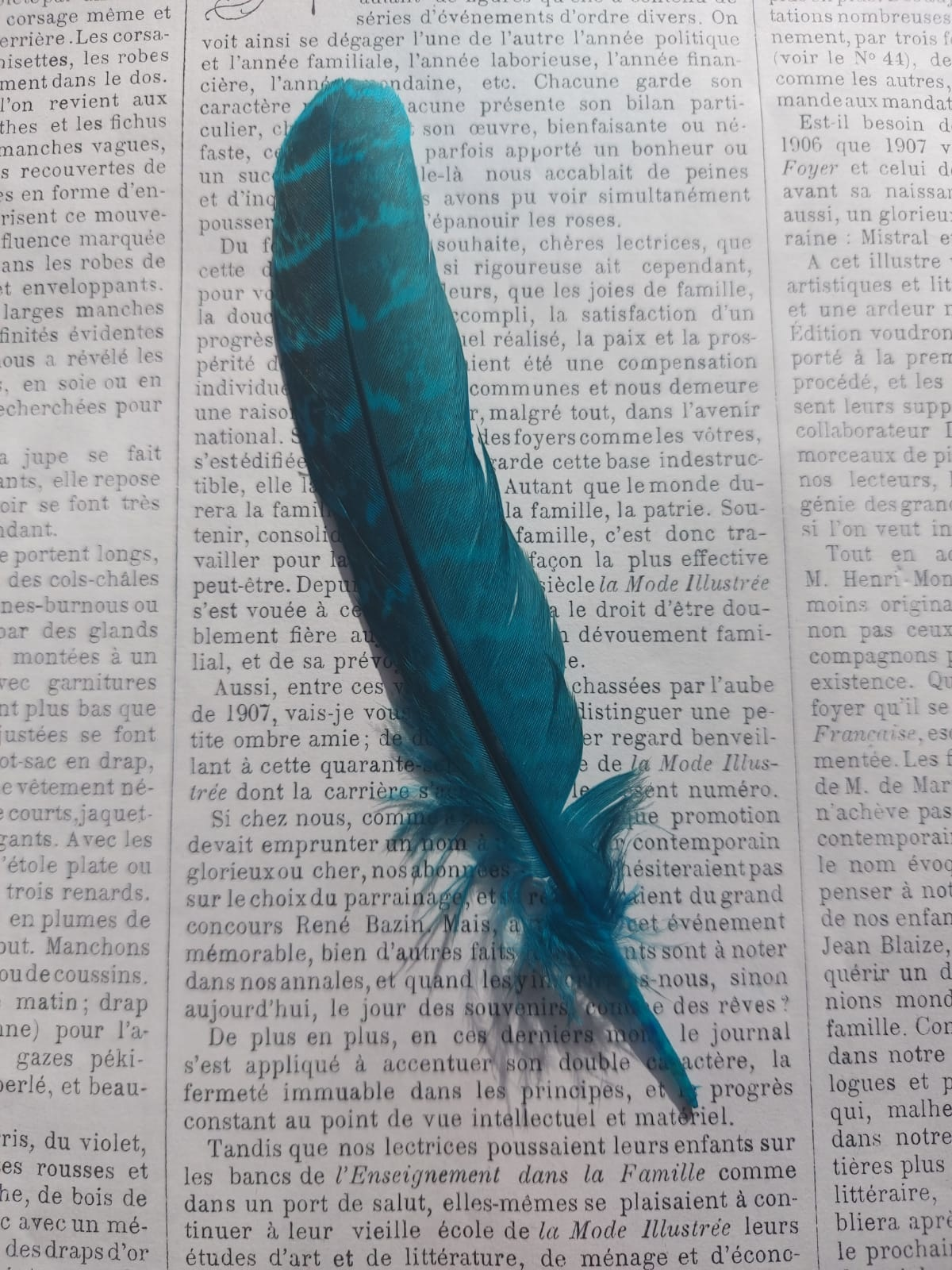 Colored Pheasant feathers diff. colors