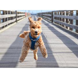 Dog Copenhagen comfort walk pro harnas