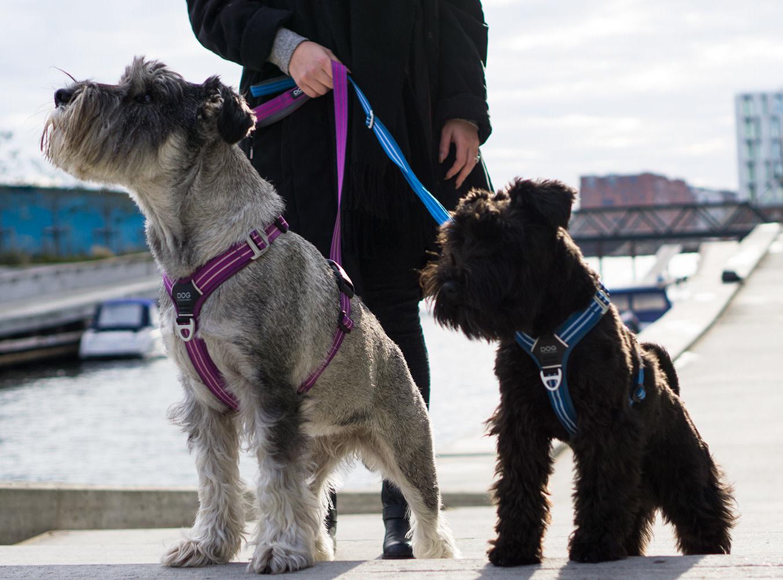 Dog Copenhagen Comfort walk air harnas