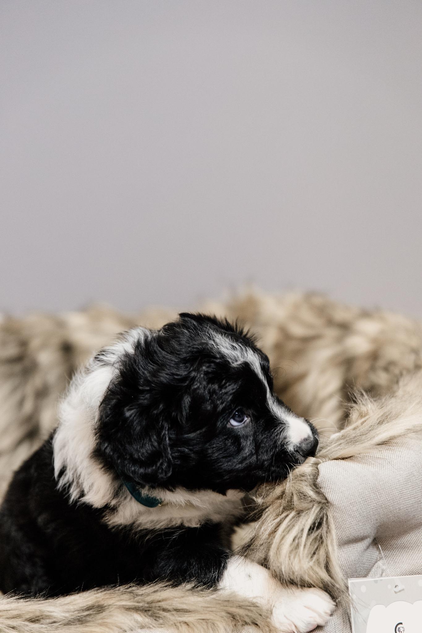 Kentucky Kentucky honden bed Cave