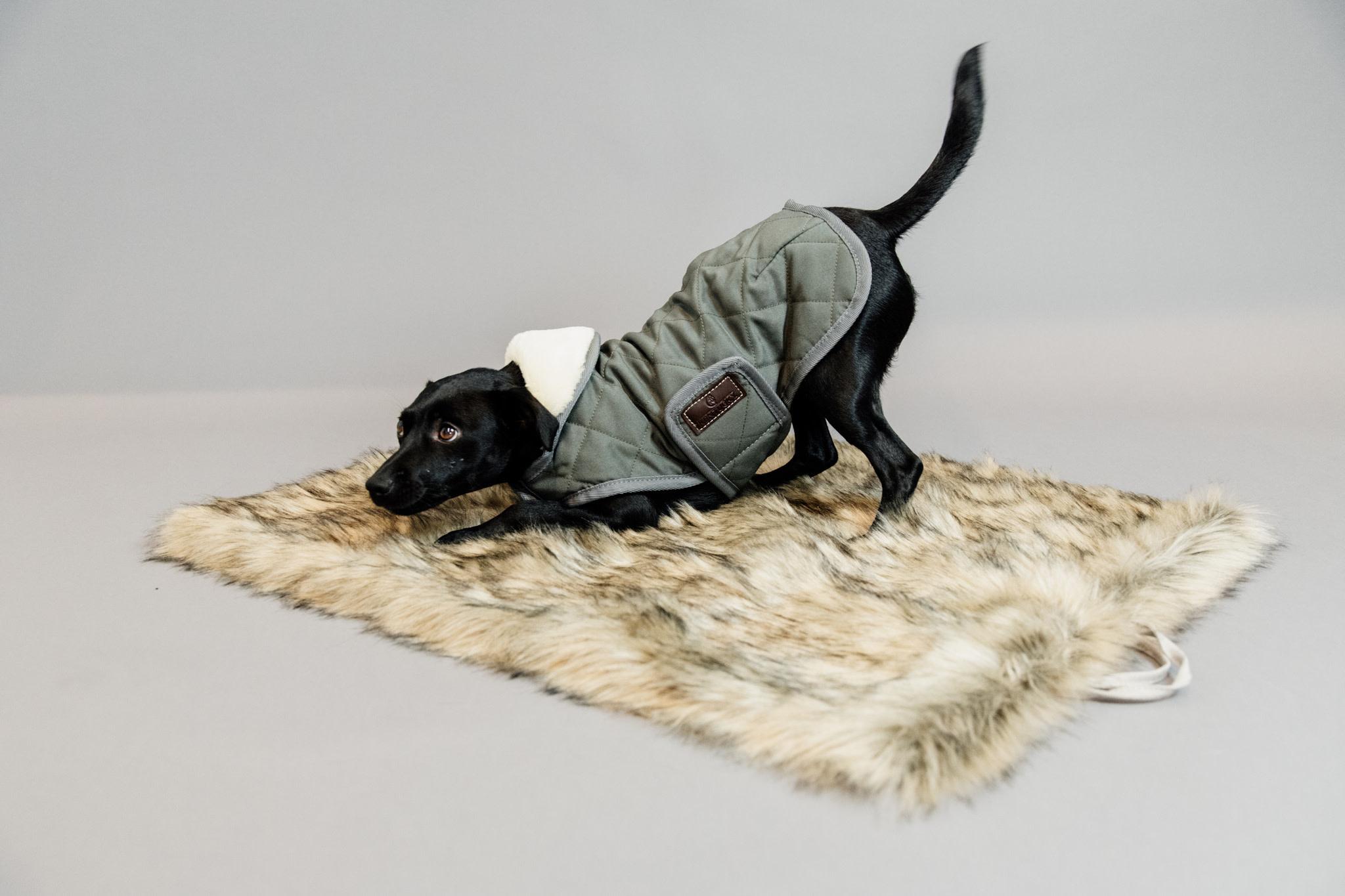 Kentucky Kentucky honden bed to go Fuzzy