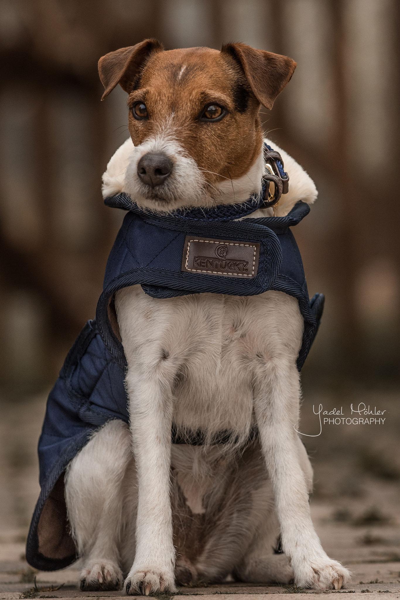 Kentucky Kentucky hondenjas