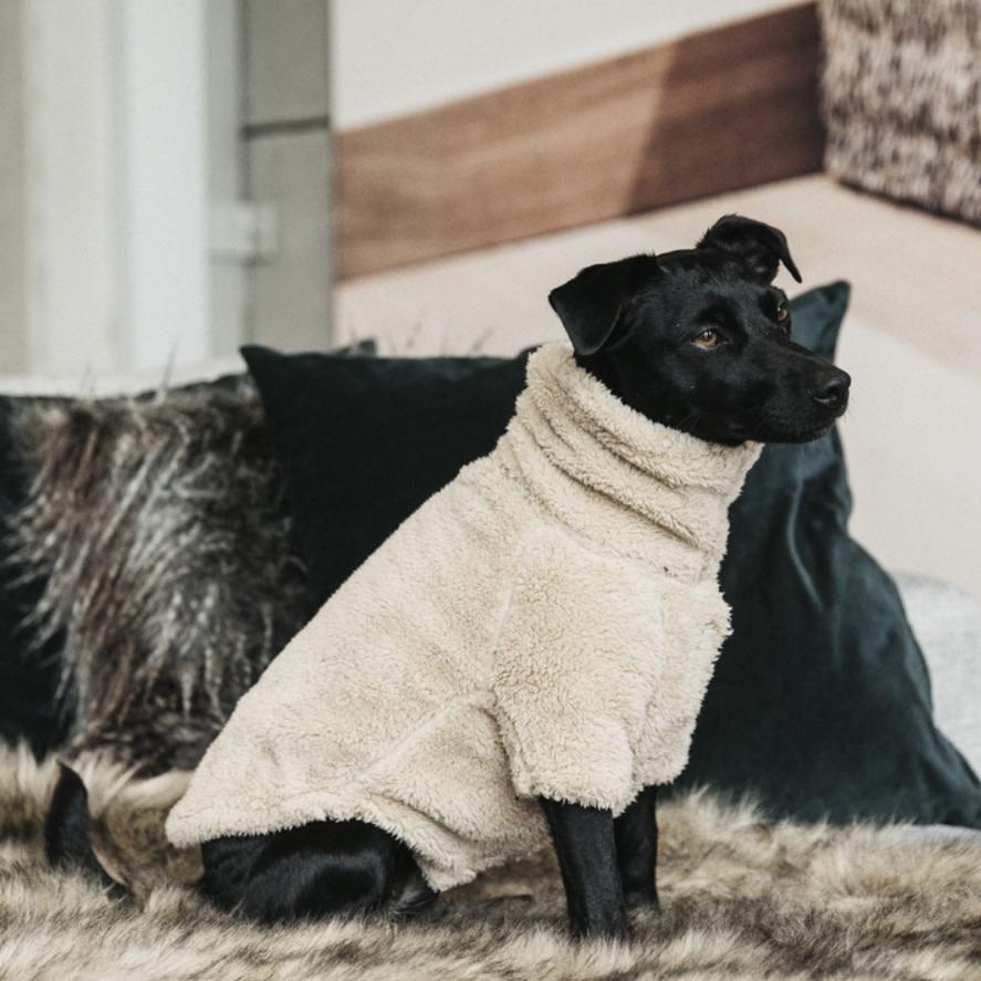 Kentucky Kentucky Dog Sweater Teddy Fleece