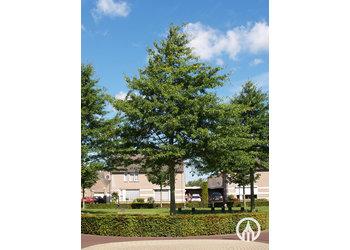 Boomkwekerij M. van den Oever Quercus palustris