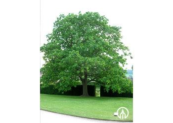 Boomkwekerij M. van den Oever Quercus rubra