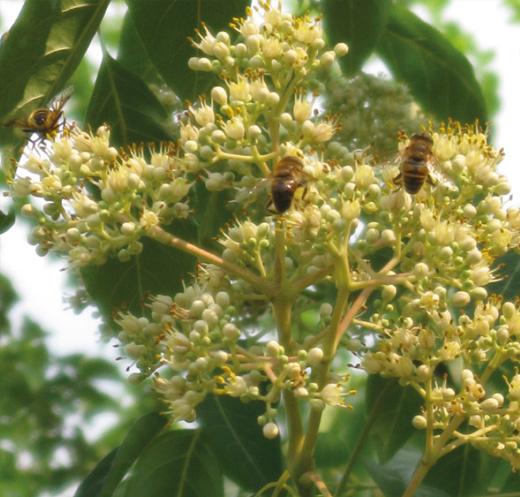 BeeTrees™ oplossing
