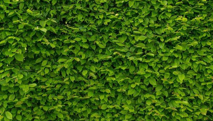 Hagen en bosplantsoen