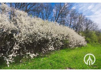 Boomkwekerij M. van den Oever Prunus Spinosa