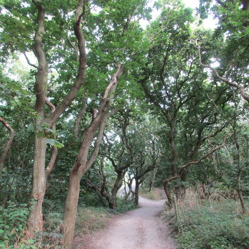 Bomen en planten aan de kust