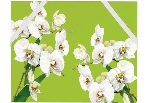 Cedon Cedon Folder Orchid